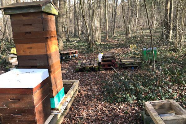 Les ruches de Stéphane Balesdent ont été volées dans un bois à Boves
