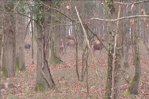 60 animaux devront être prélevés sur la propriété d'Epineuil-le-Fleuriel (18).