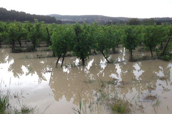 Les inondations des vignes à Bages dans l'Aude - 12 juin 2015.