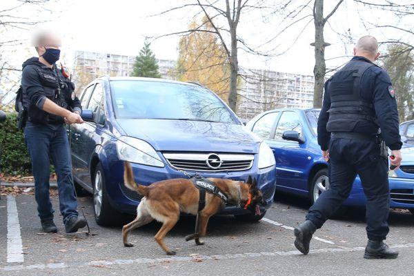 Les policiers de la brigade cynophile dans le quartier des Coteaux à Mulhouse.