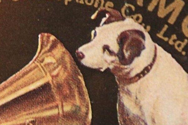 Que faire face aux aboiements intempestifs du chien du voisin ?