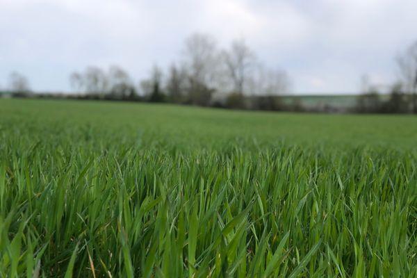 Les écorégimes pourraient permettre de récompenser les pratiques vertueuses des agriculteurs.
