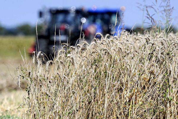 L'agriculteur a découvert le corps dans son champ.