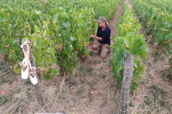 Aurore Casanova au milieu de ses vignes à Mardeuil (Marne)