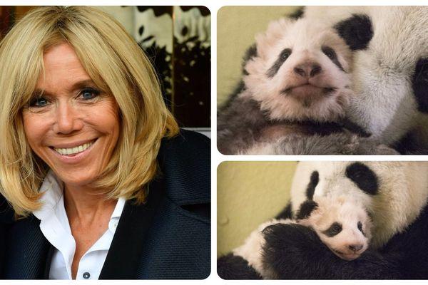 Le 5 août 2017, au lendemain de la naissance du premier bébé panda sur le sol français, Brigitte Macron avait accepté d'en devenir la marraine.