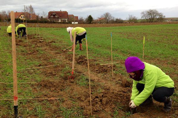 A terme, 200 arbres seront plantés