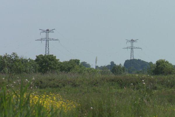 Les cigognes sont très nombreuses du côté de Rochefort