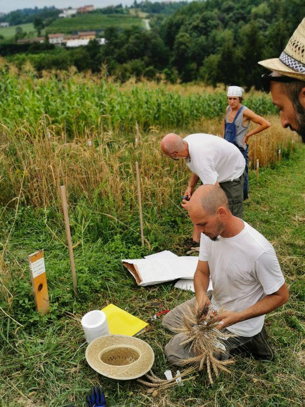 A Vicoforte, dans le Piémont, un des paysans boulangers