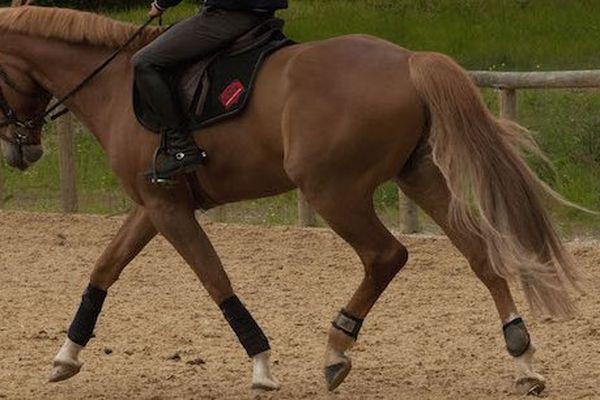 L'équilibre du cheval comme celui du cavalier. Un travail au long cours.