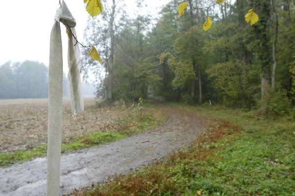 C'est un agriculteur qui a trouvé les quatre bébés dans la forêt de Galfingue en octobre 2003.