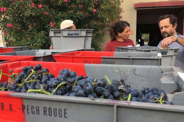 Une fois arrivé à la cave, le raisin est vinifié sans sulfite ni adjuvant de fabrication.
