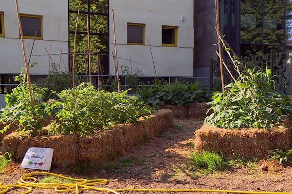 Le potager du parc Gamenson derrière la médiathèque donne déjà fruits et légumes