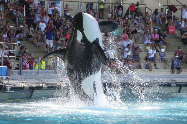 Si cette loi passe, il pourrait ne plus y avoir d'orques à Marineland d'ici 2026.