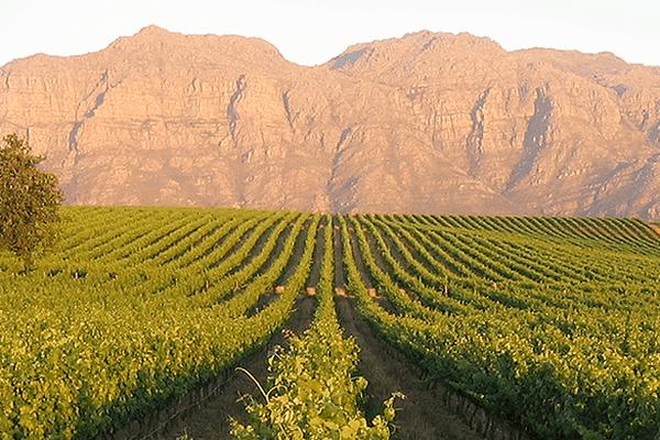 Le domaine sud-africain Kleine Zalze produit le meilleur vin blanc du monde en 2015.