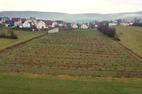 Plantation d'arbustes pour stabiliser le sol sur un ancien couloir de boue.