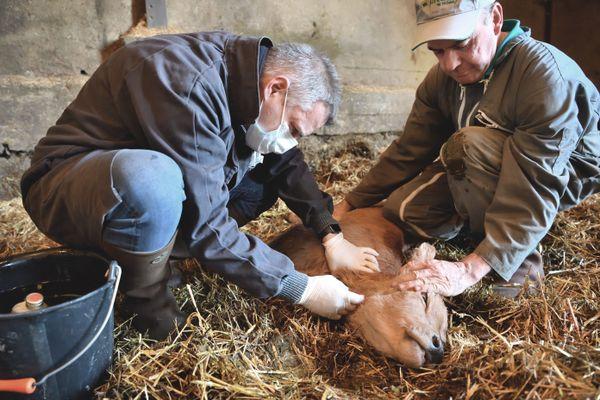 La profession perd régulièrement des effectifs dans les campagnes du Limousin (illustration).