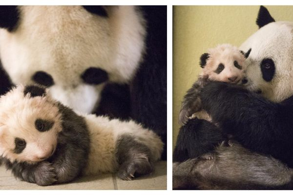 Yuan Meng à 3 mois avec sa maman