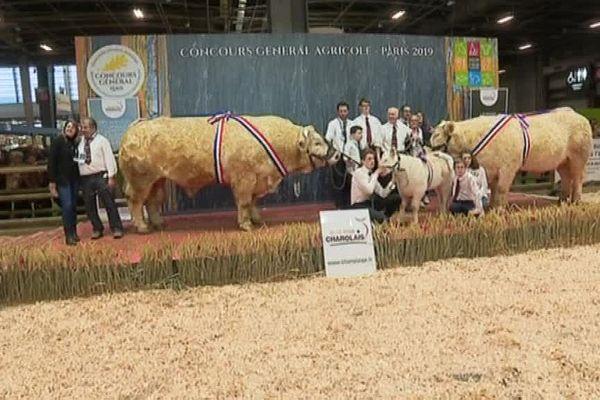 La Bourgogne à l'honneur au concours de la race charolaise du Salon international de l'agriculture 2019