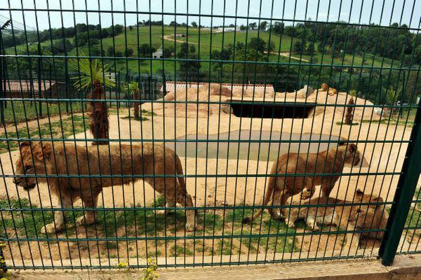 Le zoo des 3 Vallées a ouvert en 2013, à Montredon-Labessonié, dans le Tarn.