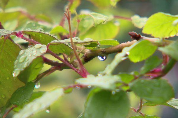 Depuis le début du mois de mai, il a plu par endroits trois fois plus qu'à la normale