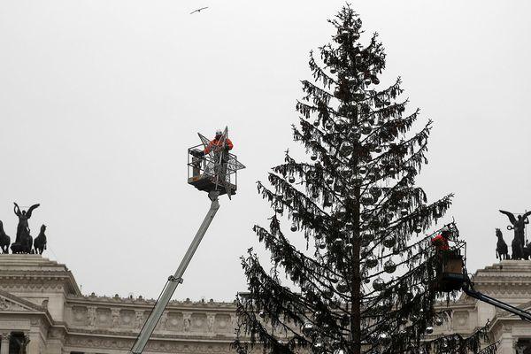 """""""Spelacchio"""", l'arbre de noël déplumé de Rome, aura une seconde vie."""