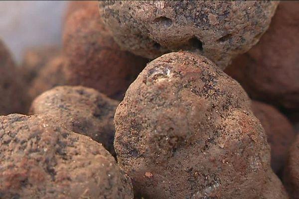 Le kilo de truffes coûte actuellement 1200 euros.