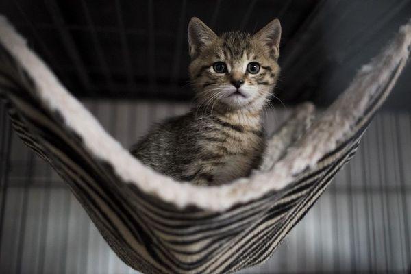 C'est la période des naissances des chatons et en prendre un à la maison peut être tentant : réfléchissez bien !