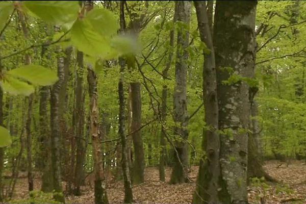 Le bois de la Ravière, à Uchon en Saône-et-Loire.
