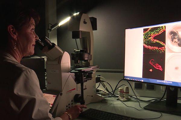 En deux ans, l'équipe a testé 2700 substances, à la main. 96 tests par jour, quand une machine pourrait réaliser 1900 tests en une journée.