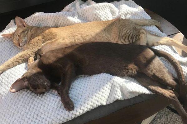 Les chats de Lionel se passionnent pour le montage du reportage (Insta : Oneschoco)