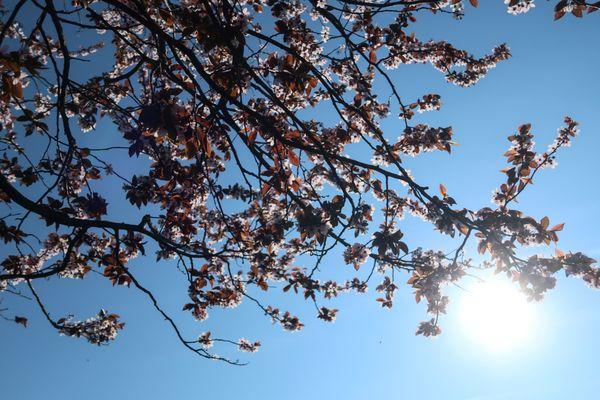 Il fera plutôt bon et le temps sera majoritairement ensoleillé pour le week-end de Pentecôte, en Auvergne-Rhône-Alpes. Les températures seront encore en hausse lundi 21 mai.