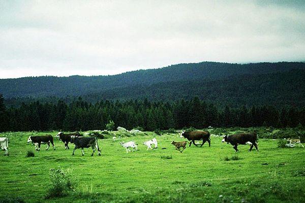 Elevage au grand air des vallées les plus enclavées des Pyrénées Orientales