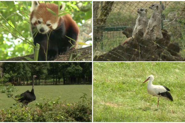 Les animaux du parc de la réserve zoologique de la Haute-Touche ont retrouvé les visiteurs.