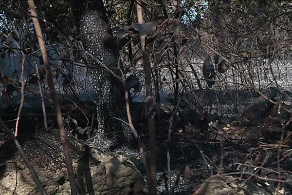 En tout, plus de 80 hectares de pinède et garrigue ont été détruits par les flammes à Grabels - 7 septembre 2017