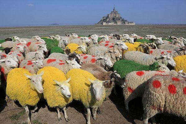 Des moutons de pré-salé aux couleurs des maillots du Tour de France