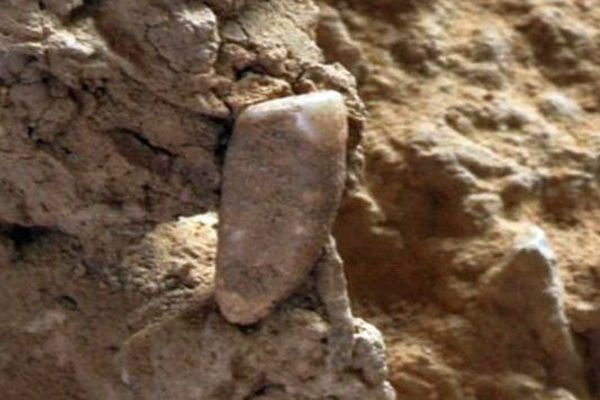 Une dent humaine d'environ 550.000 ans a été découverte