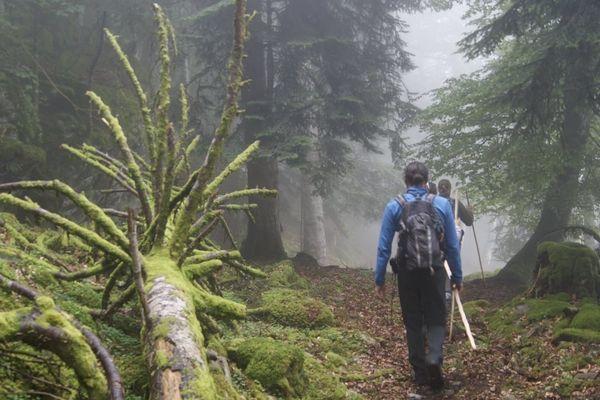 """La randonnée """"Sur les traces de l'ours"""" organisée par l'association """"Pays de l'ours -Adet"""""""