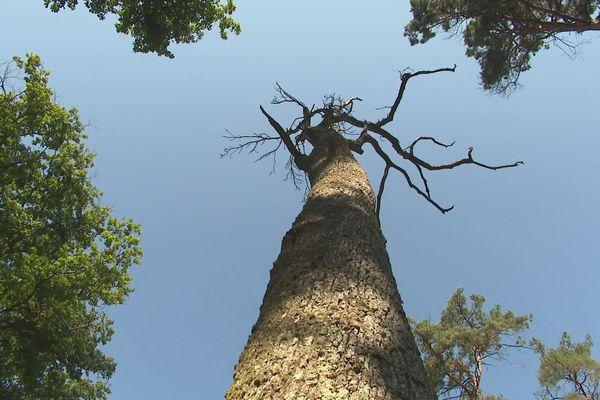 De nombreux arbres de la forêt de Moulière près de Poitiers n'ont pas résister aux épisodes de sécheresse.