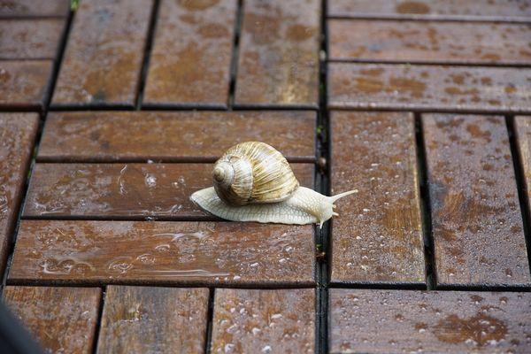Sortir de sa coquille, se motiver malgré la pluie