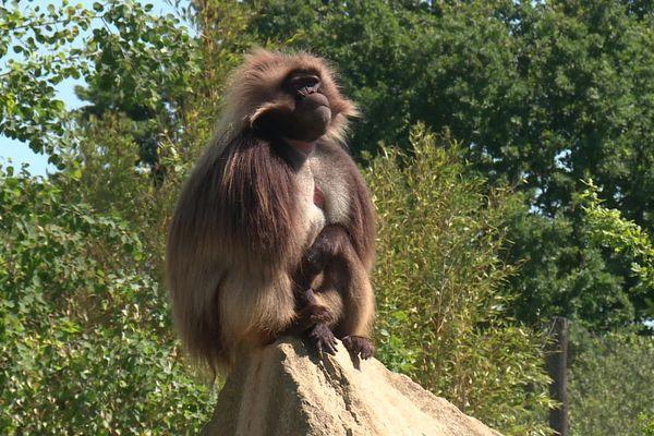 Les pensionnaires du zoo de La Boissière-du-Doré sont aussi restés confinés