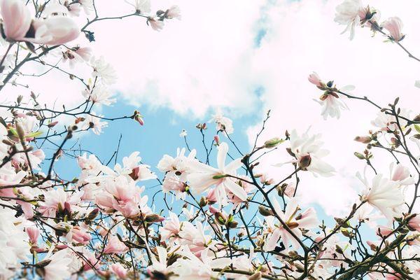 Le printemps est là mais dans une ambiance encore un peu fraîche pour la saison