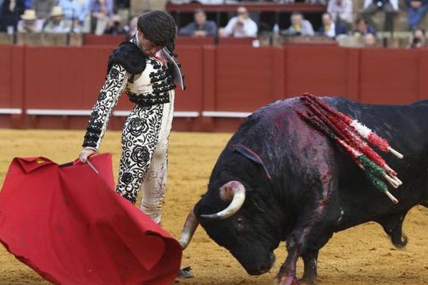 Séville, 26 avril 2017. Ruidoso, un grand Torrestrella dans la muleta de José Garrido.