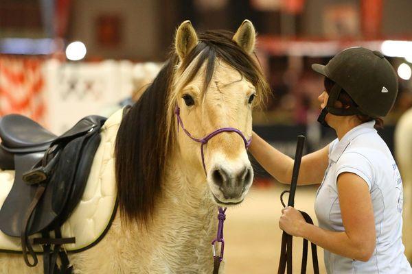 Le bien-être du cheval et son cavalier : source de toutes les attentions des entreprises