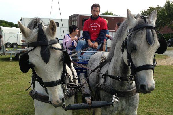 Des percherons mais aussi des poneys, comme cette paire de Welsh pour cette journée particulière