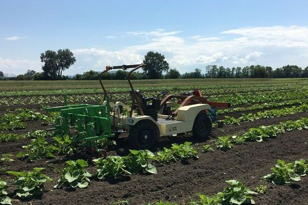 Ce tracteur électrique a été imaginé par l'entreprise Sabi Agri à Saint-Beauzire dans le Puy-de-Dôme.