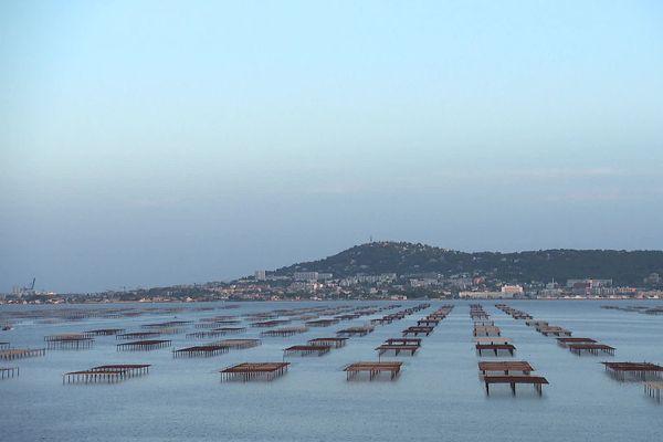 Parmi les 10 étangs étudiés, celui de Thau est la 3ème lagune la moins exposée en nombre de substances retrouvées mais le risque chronique lié à la présence de pesticides y est néanmoins jugé fort, à la station de mesure de Bouzigues comme à celle de Marseillan.