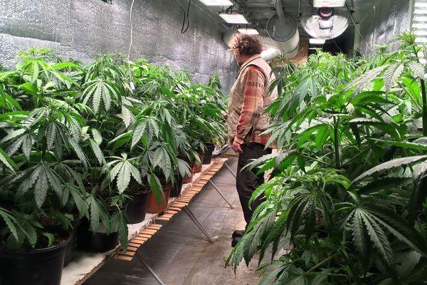 La production de cannabis thérapeutique pourrait démarrer en Creuse l'an prochain.