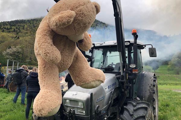Les éleveurs réclament le retrait de l'ours Goait après une attaque dans une bergerie à Lançon (Hautes-Pyrénées)