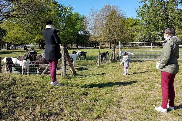 Inès, deux ans et demi, découvre les chèvres pour la première fois, accompagnée de sa mère Nadia, et sa grand-mère Anne