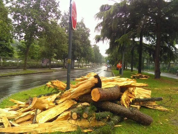 L'arbre foudroyé a ensuite été débité par les services techniques de la ville de Rennes